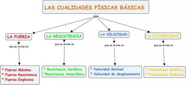 Clasificacion de las capacidades físicas básicas