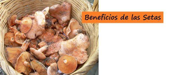 Beneficios y Aportación de las SETAS en la Alimentación y Nutrición del Deportista.